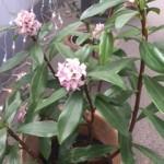 小さな春2